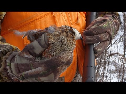 Southern Kentucky Quail Hunt & Land Management