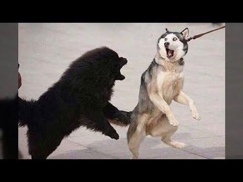 Funniest Animals - Awesome cute Pet Animals' Life Videos