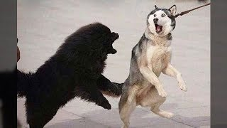 Funniest Animals - Awesome cute Pet Animals\' Life Videos