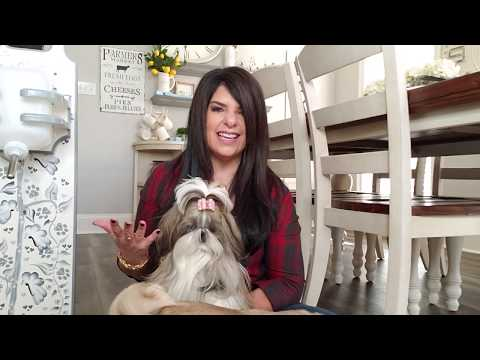 How to keep Shih Tzu, Old English Sheepdog, Yorkie and other dog beards stain free