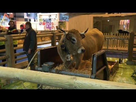 La reine du salon de l 39 agriculture haute est arriv e for Salon de l agriculture paris 2018