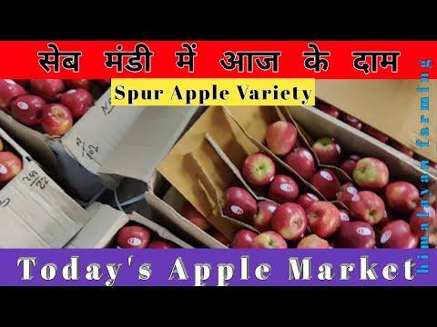 Today's Apple Market