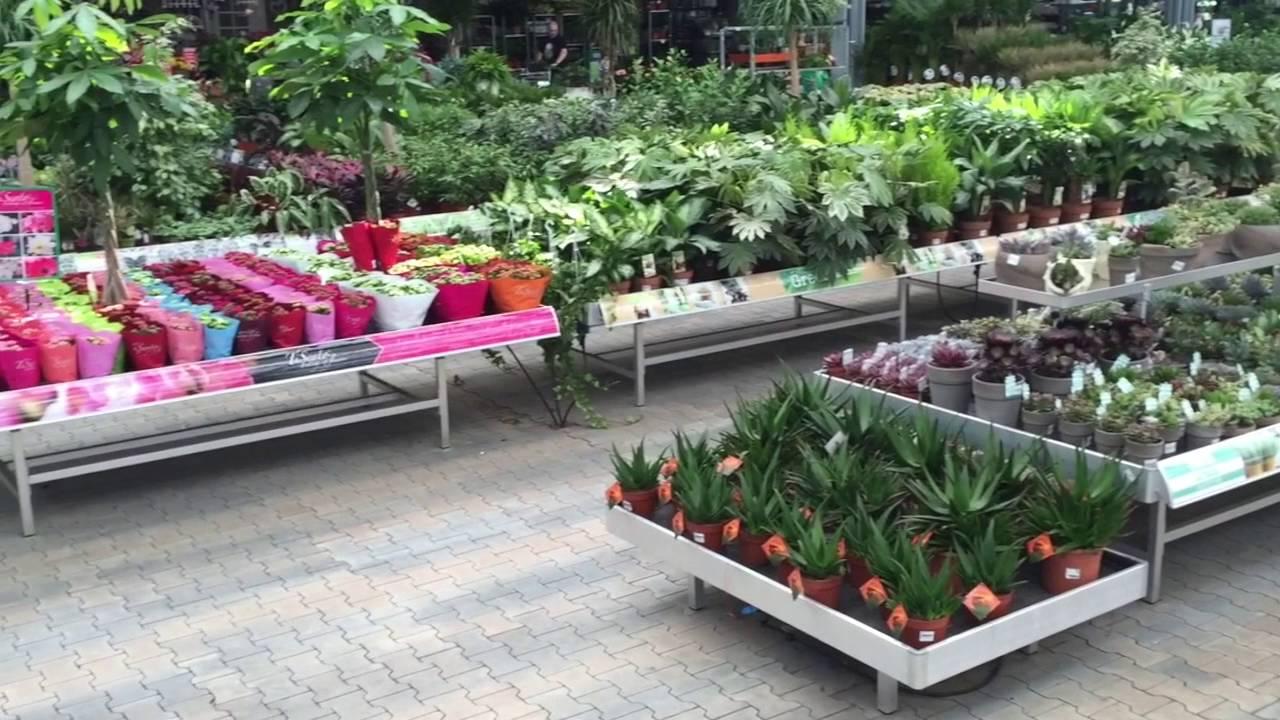 Plant Collect Inrichting kamerplanten Gartenwelt Emsbren