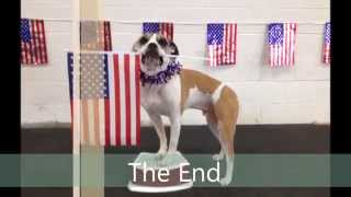 July 4th Dog Tricks - Chicago Dog Training