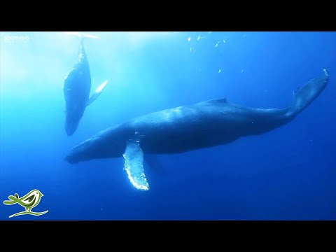 Sleep Music In Underwater Paradise: Deep Relaxing Music, Sleeping Music, Meditation Music ★147