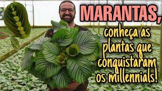 Marantas – As Plantas Que Conquistaram Os Millennials