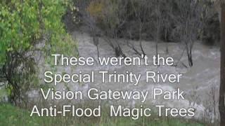 JD Granger's Magic Trees Saving Arlington From Fort Worth, Texas