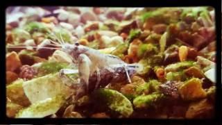 Спаривание карликовых раков