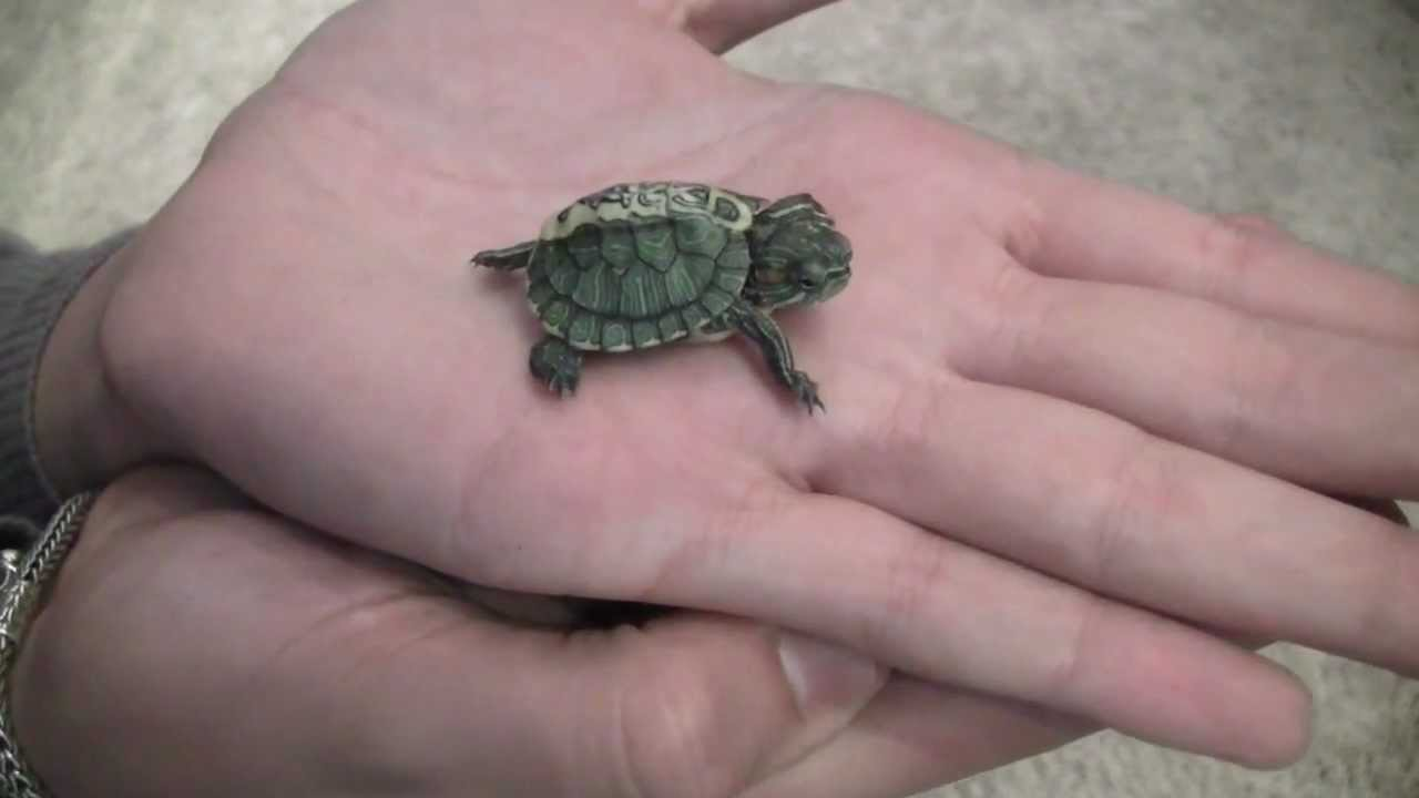 rare mohawk slider   res turtle mutation unboxing   youtube