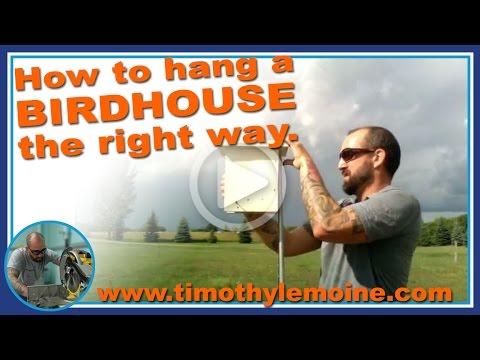 How to Hang a Birdhouse the Right Way