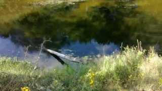 Клад малой-перещепины Полтава (хан Курбат) видео(Здесь был найден клад хана КУРБАТА основателя Болгарии и Киева, с виду задротная речка но на поляни было..., 2013-08-13T10:33:54.000Z)