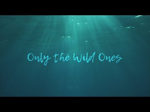"Dispatch - ""Only The Wild Ones"" [Official Music Video]"