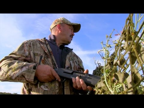 The Shooting Show – shotgun foxing and the Mauser M12 PLUS the FITASC Classic 2014