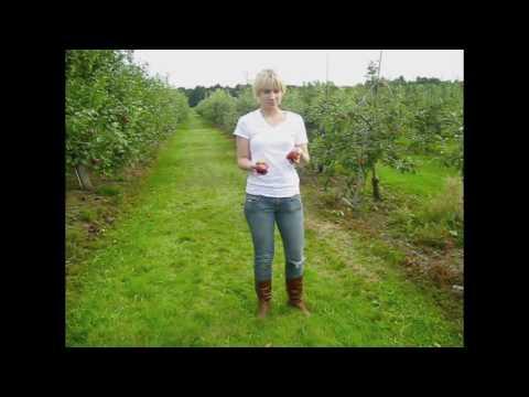 Corn Mazin', Apple Grazin'