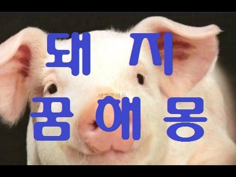꿈해몽 알아보기!!돼지꿈의 모든것!!!