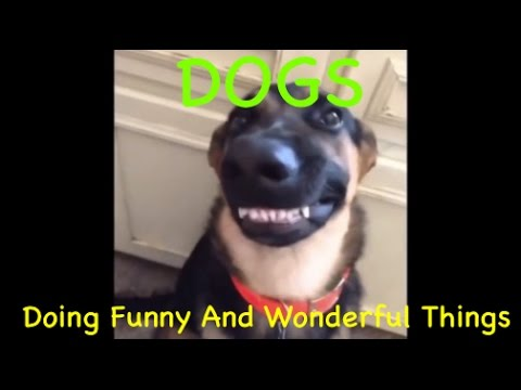Cute Dogs Doing Weird And Funny Things Mlc_drive