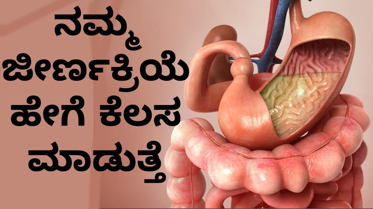 How The Digestive System Works Step By Step In Kannada Youtube