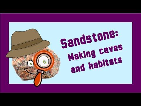 Rock Detectives! Sandstone: Making caves and habitats