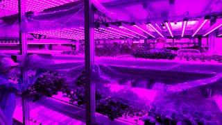 野菜育む 紫の工場 尼崎・日本山村硝子