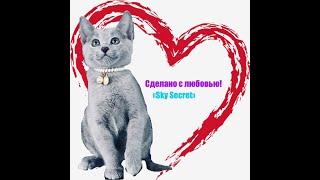 Котята русской голубой кошки.