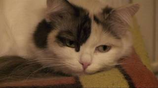 Глядя в глаза кошки...