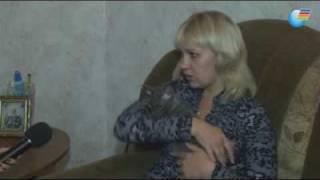 Кошка породы корниш-рекс (Керчь)
