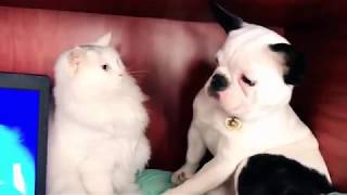 very funny animals mix1