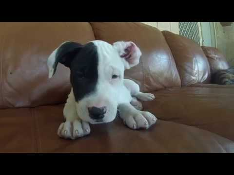 *MUST SEE* *Cute Puppies*