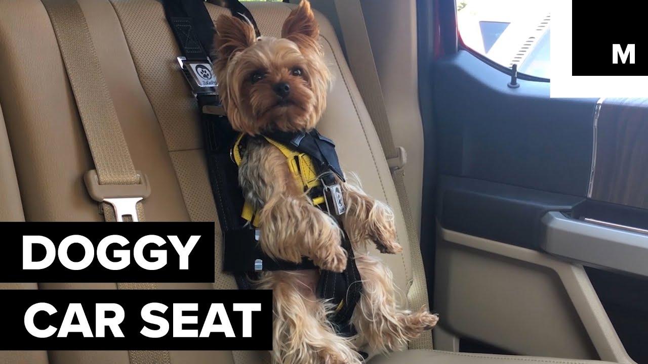 Doggy Car Seat Keeps Pet Safe