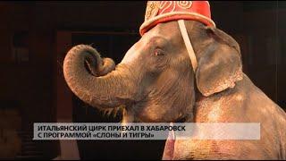 Итальянский цирк приехал в Хабаровск с программой «Слоны и тигры»