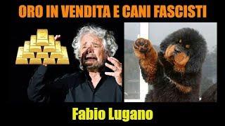 Beppe Grillo e l'ORO; Siria abbattuto aereo russo; il cane fascista di Monza | Fabio Lugano