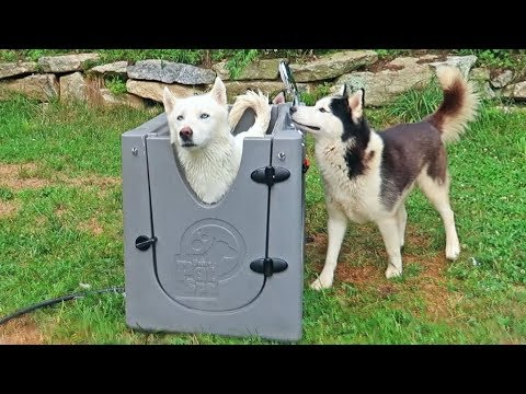 5 Dog Gadgets Put to the Test - Part 8