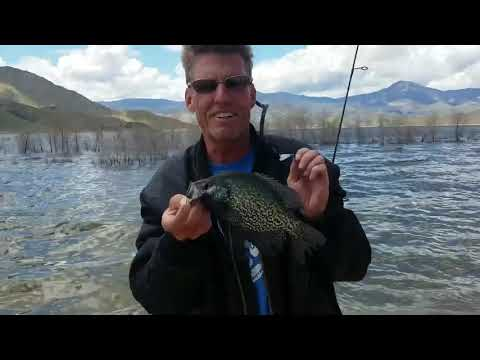 Fishing Report For Kern River And Lake Isabella April 2019