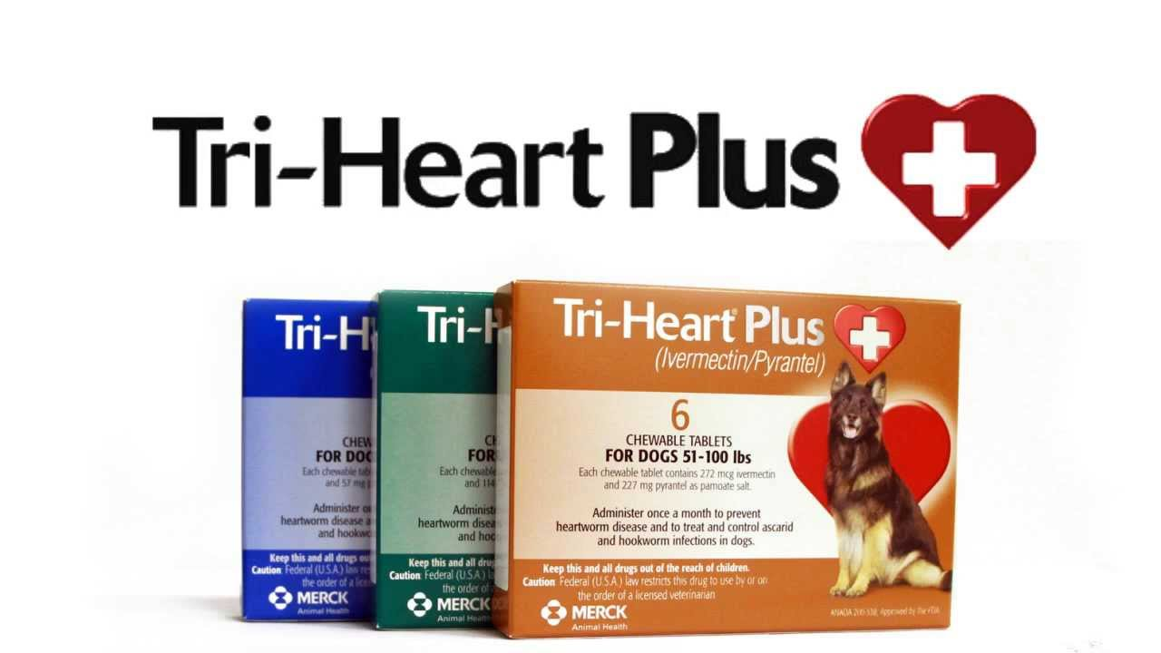 Tri Heart Plus Heartworm Prevention For Dogs Youtube