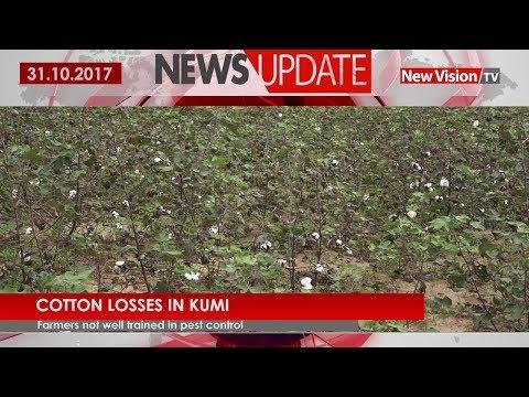 Kumi suffers cotton losses