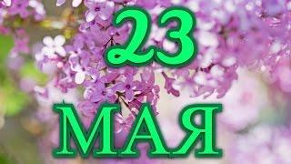 23 мая Всемирный день черепахи  и другие праздники...