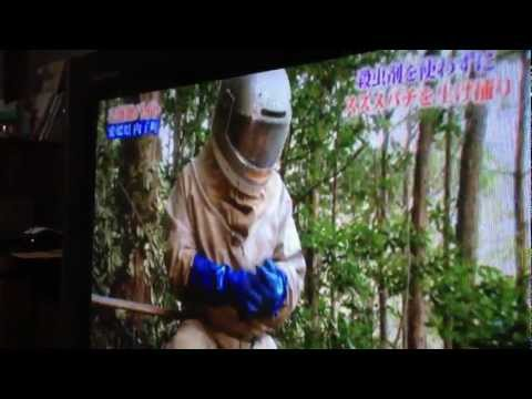 Suzumebachi Hunters on Japanese TV