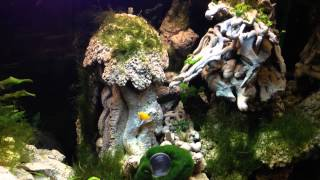 Freshwater  Aquarium, Fish Tank, With Diy Rock