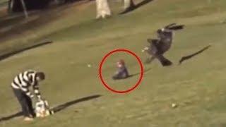 СТРАШНОЕ нападение орла на ребенка атака орла беркута