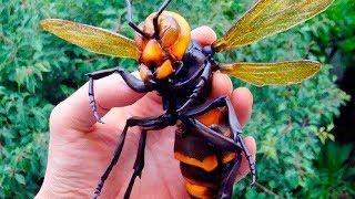 Die 10 Gefährlichsten Insekten der Welt!