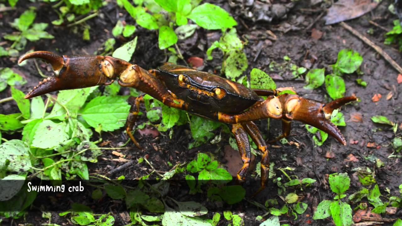 Amazing Examples Of Biodiversity In The Cerro Blanco Forest Ecuador
