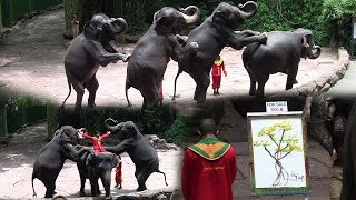 Elephant Dance At  the safari world in Thailand