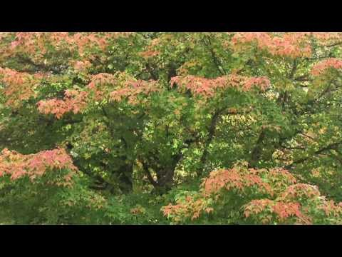 Autumn Leaves - Mantovani and his Orchestra