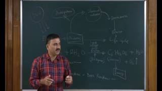 Plant Physiology: Photosynthesis - 1 (CH19)