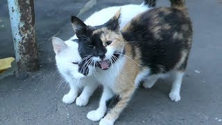 Two cats they are mom and daughter