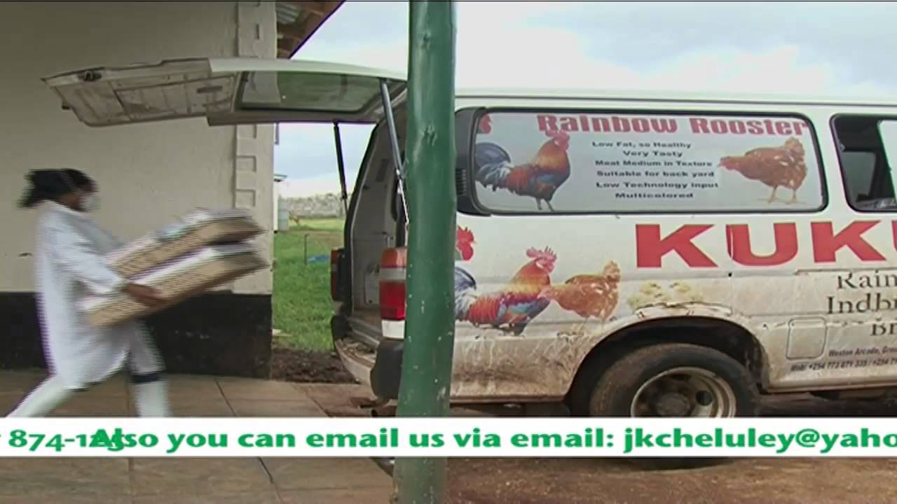 Kukuchic Rainbow Rooster Breeders