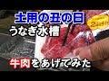 【土用の丑の日】ウナギに牛肉をプレゼント (2018日淡水槽#35)