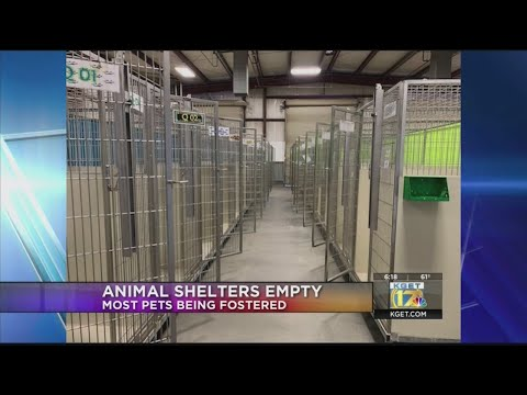 Kern County Animal Services Shows Empty Kennels As Most Animals Are In Foster Homes