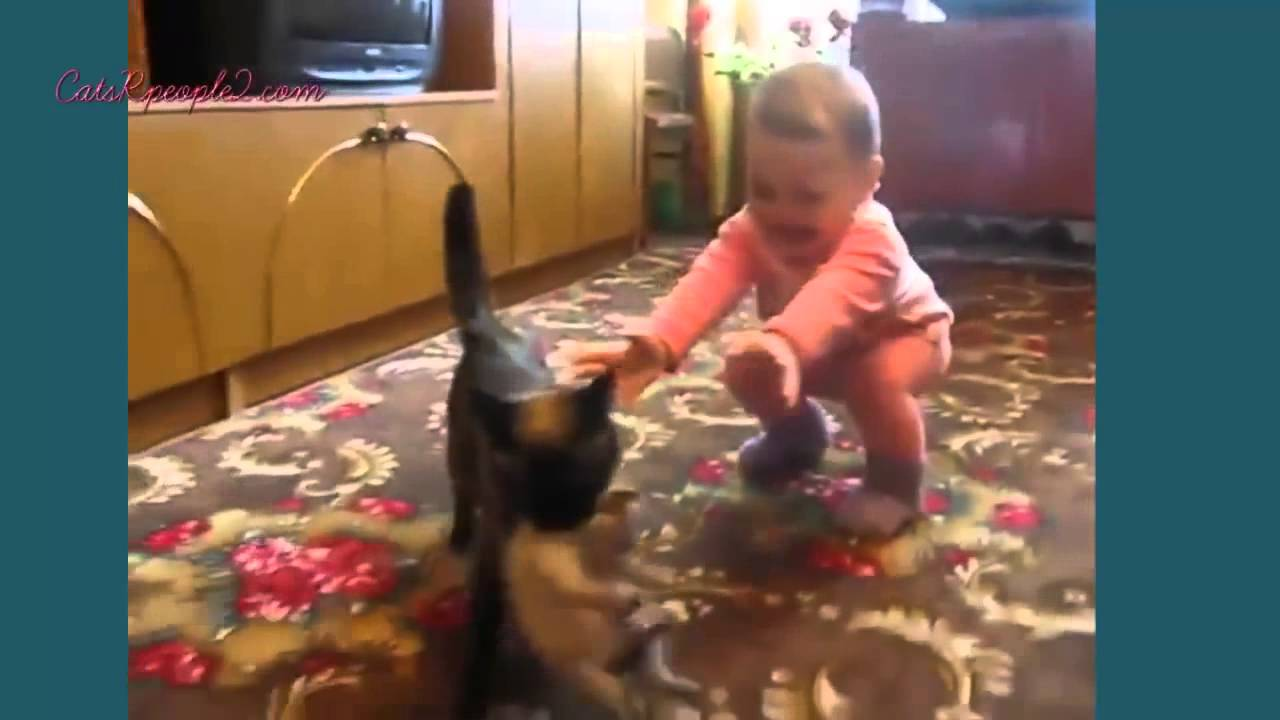 Funny videos Cats 2014 – Fails Compilation 2014