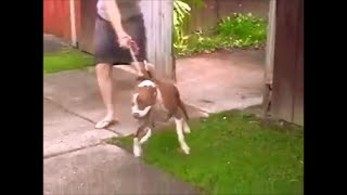 How To Train A Dog - Stop Your Dog Pulling On The Leash